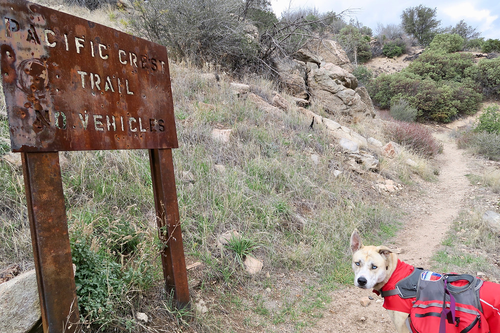 "A rusty brown sign says, :Pacific Crest Trail, No vehicles"" and a dog looks toward the camera from the trail."