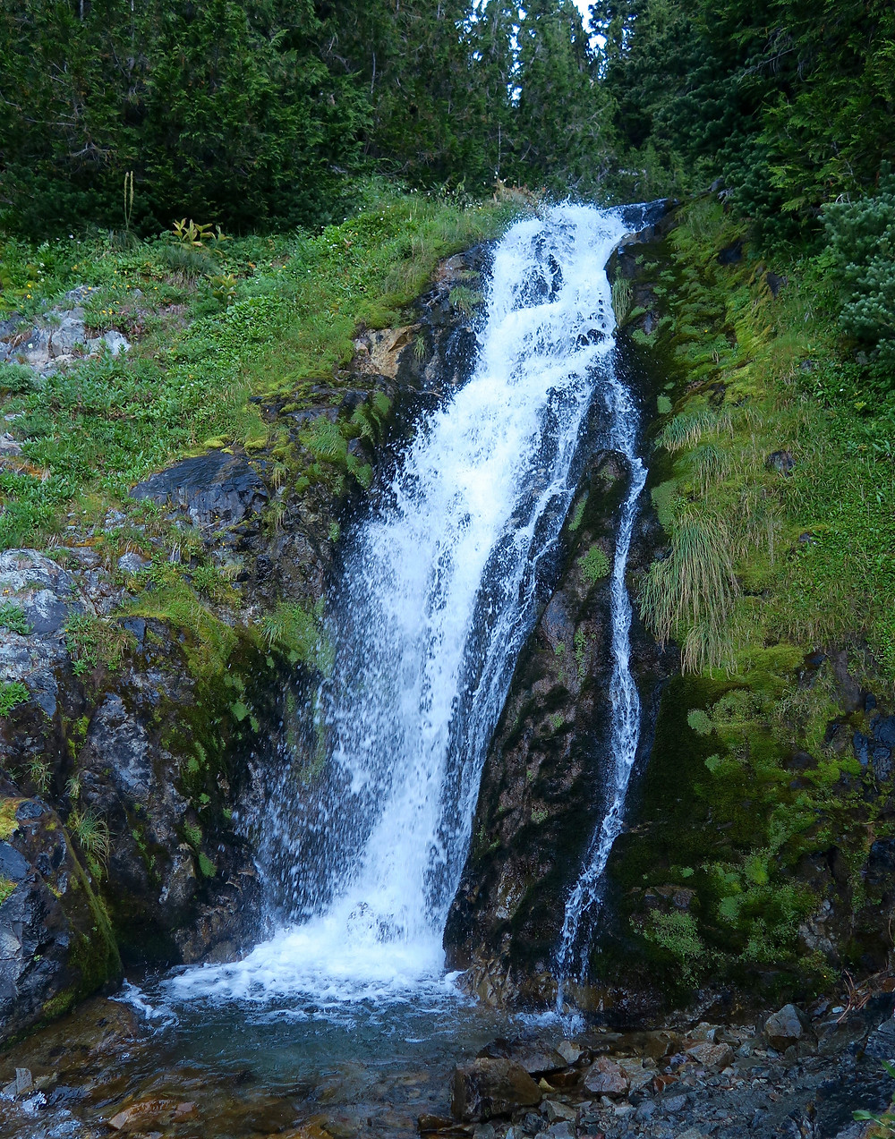 A small waterfall is surrounded by green ferns and moss.