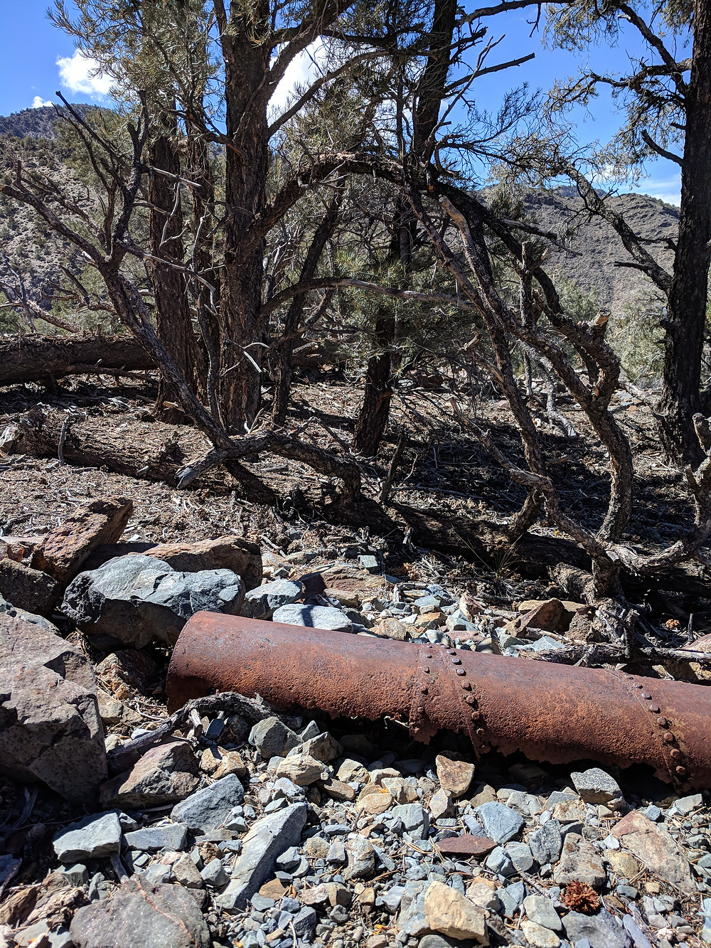 A rusty old metal pipe lays on the rocky ground, craggly-looking trees in the background.
