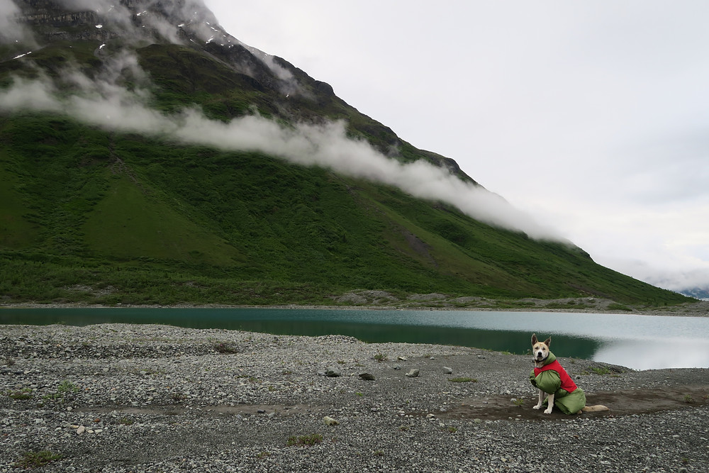 A dog wearing a green puffy down coat and red jacket sits in front of a calm lake, green mountain rising behind her and partially obscured by clouds.