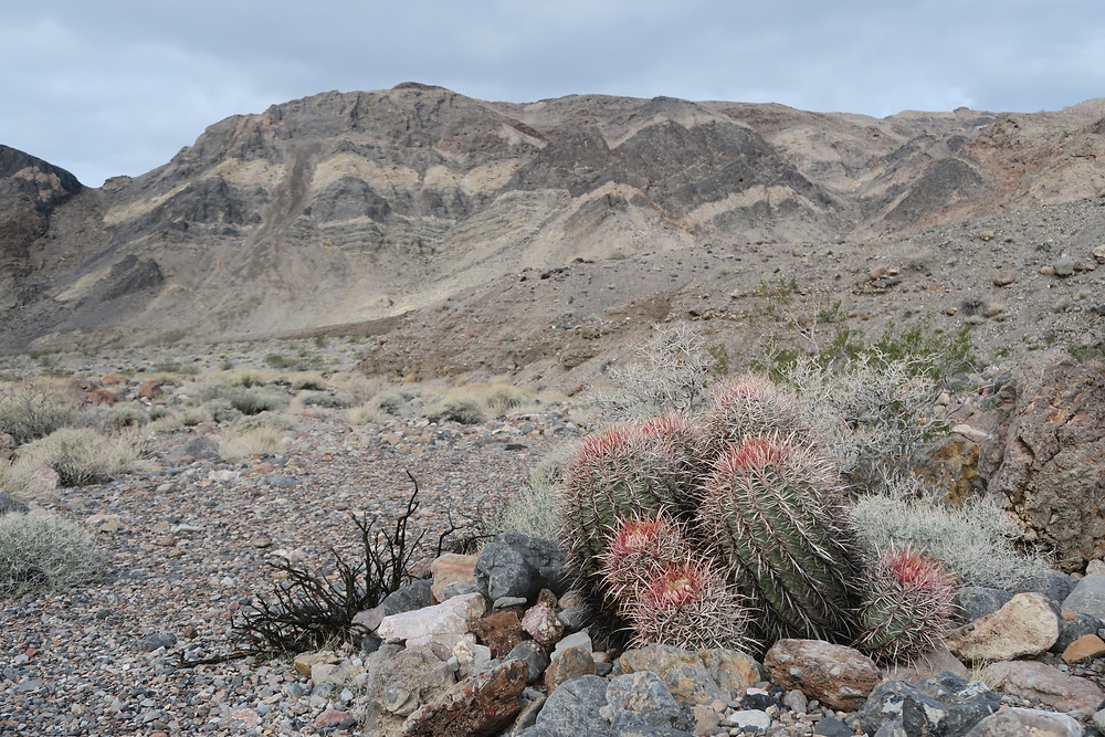 Green and pink cactus in the foreground, striated rocky mountains in the background. Photo by Tenley Lozano.