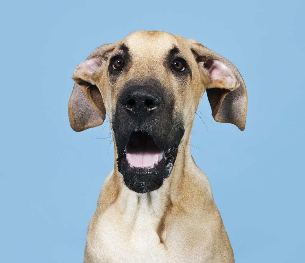Portrett av kjæledyr