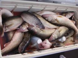 Nice Box of Fish