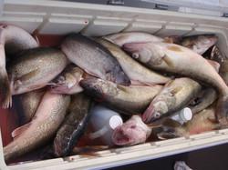 Nice Box of Fish !