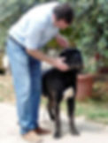allevamento cane corso italiano