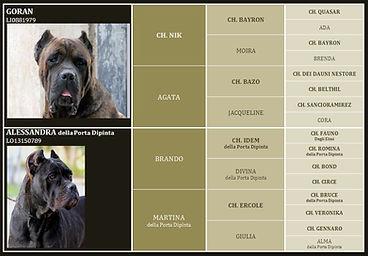 cane corso pedigree