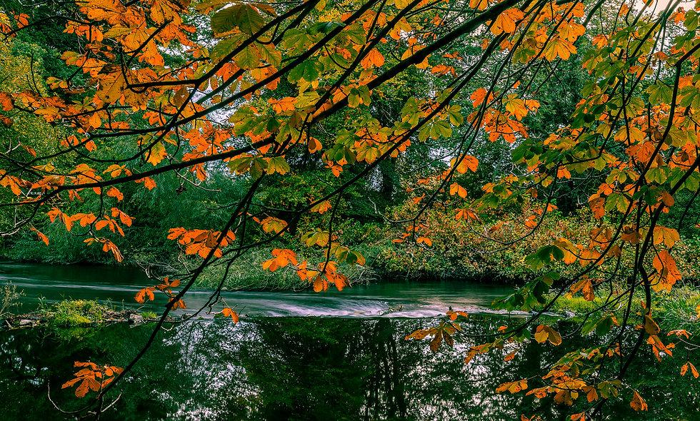 Autumn Water Tree