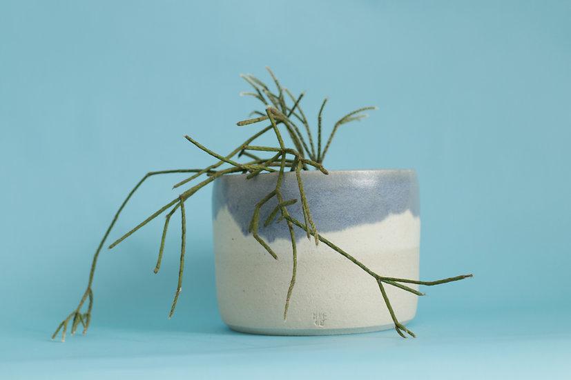 Blue rimmed planter
