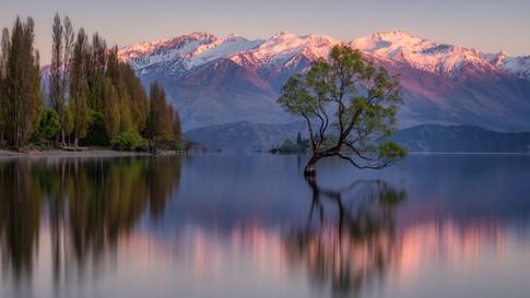 New_Zealand_17_Wanaka_Tree
