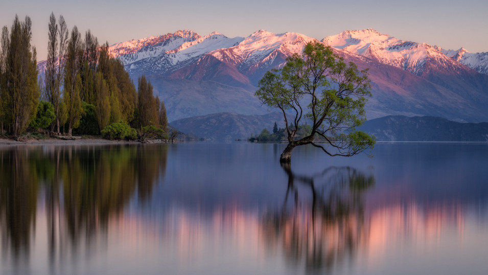 New_Zealand_17_Wanaka_Tree