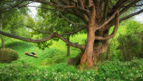 New_Zealand_02_Hobbiton
