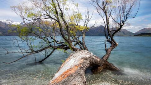 New_Zealand_29_LakeWakatipu