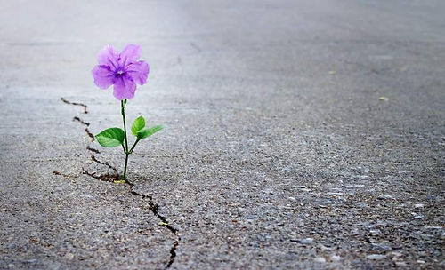 flower crack in road.jpg