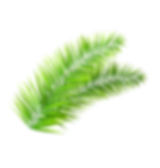 Tree Branch.png