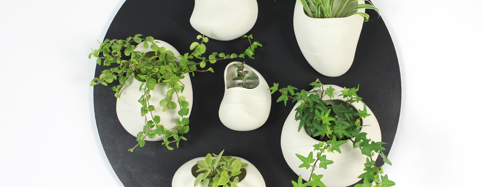 Plant Pod Cluster - 2021