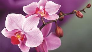 pink-orchid-macro.jpg