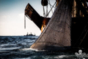 Sea Shepherd - the fight to protect the oceans