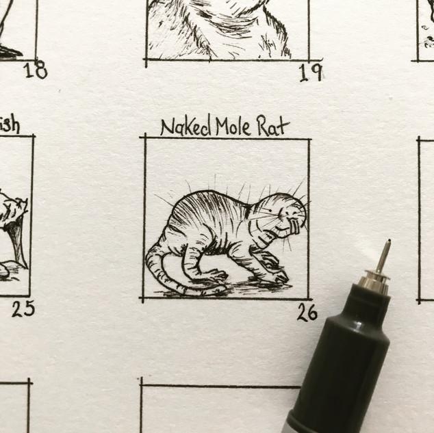 Day 26: Naked Mole Rat
