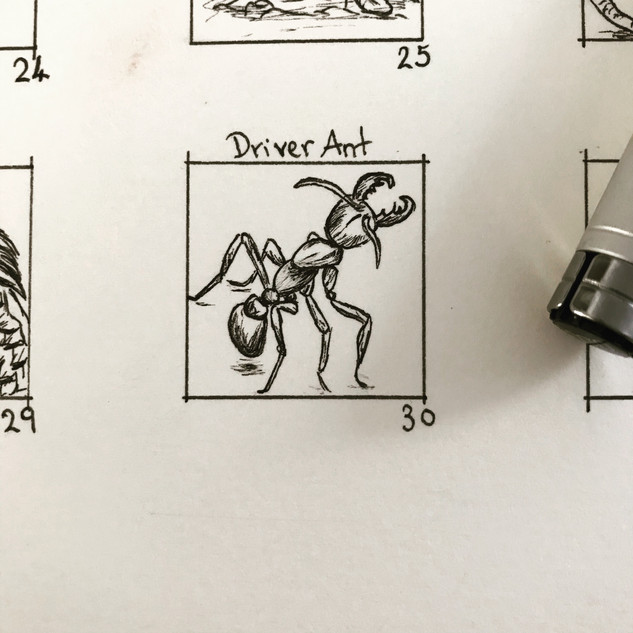 Day 30: Driver Ant