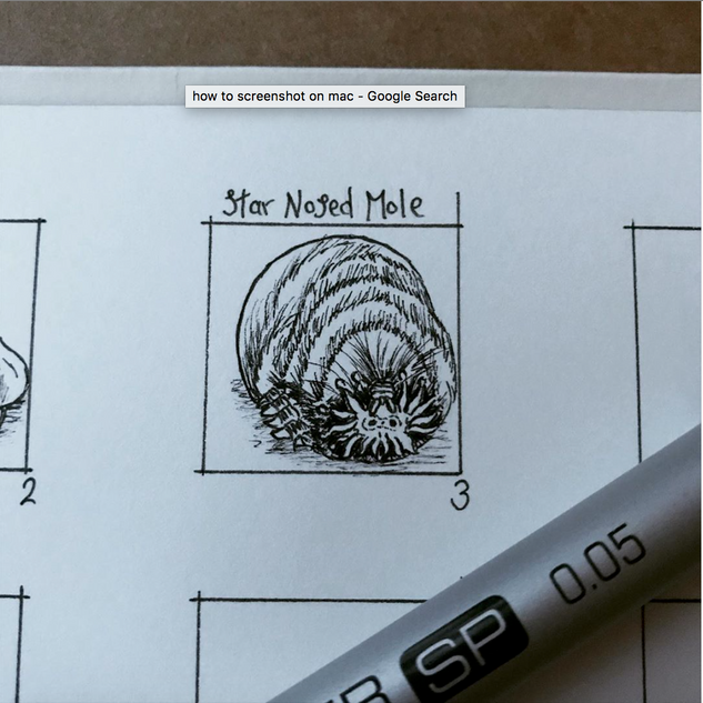 Day 3: Star Nosed Mole