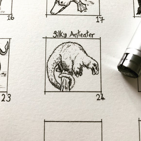 Day 24: Silky Anteater