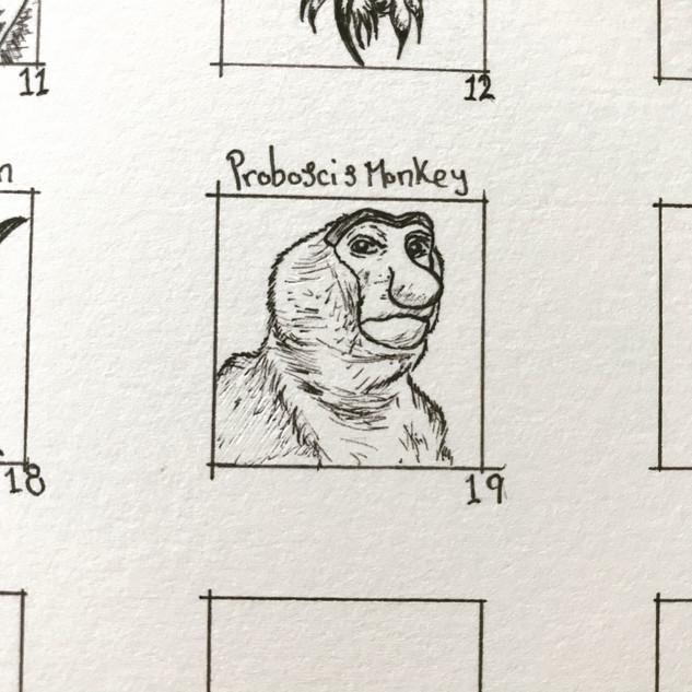 Day 19: Proboscis Monkey