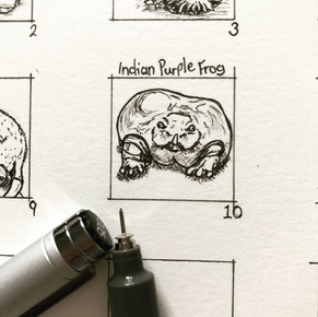Day 10: Indian Purple Frog