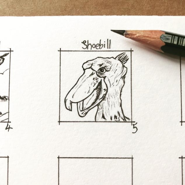 Day 5 Shoebill
