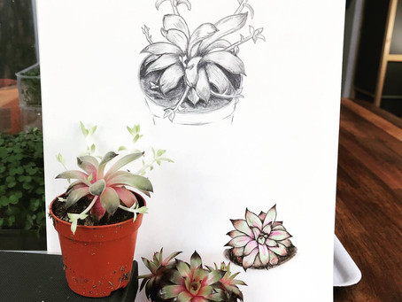 Still Life Practise - Succulents