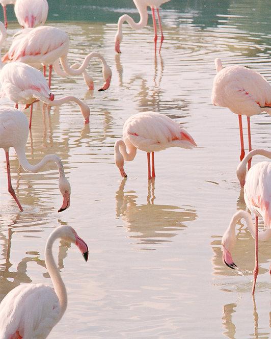 Flamingo xiii