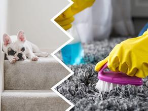 Produits de nettoyages toxiques pour nos chiens et chats.