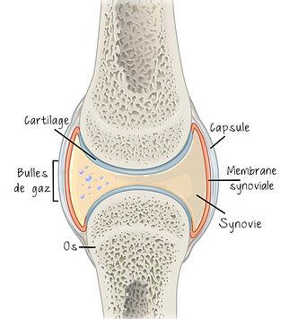 craquement articulation cheville