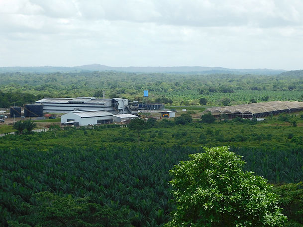 nicaragua-aceite-de--palma-web.jpg
