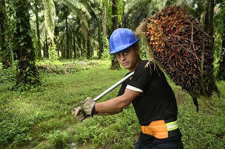 solidaridad-mapa-joven-aceite de palma.J
