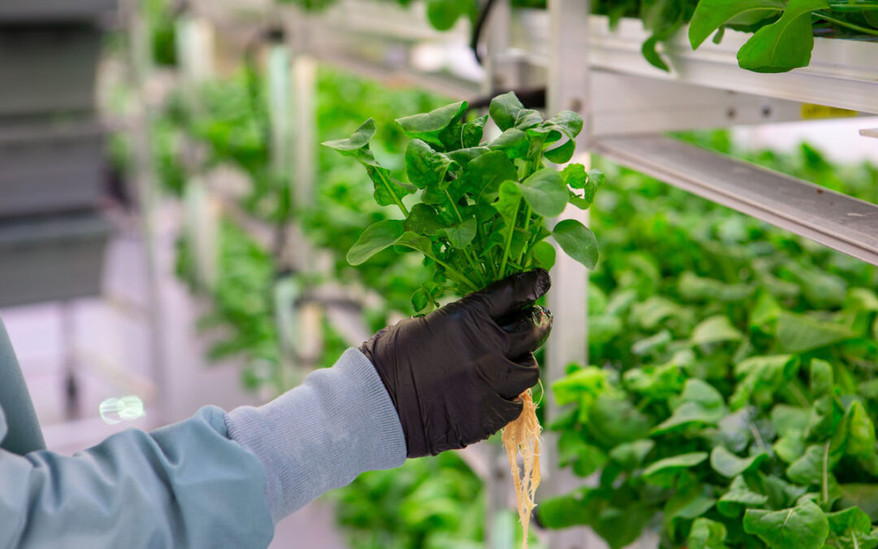 The future of agriculture as the savior of humanity