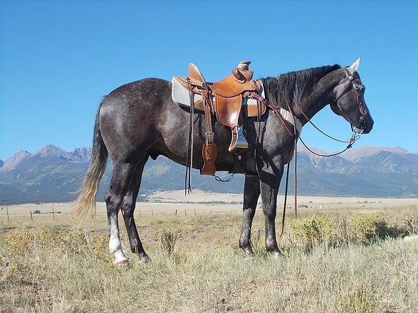 Cowboy (3).JPG