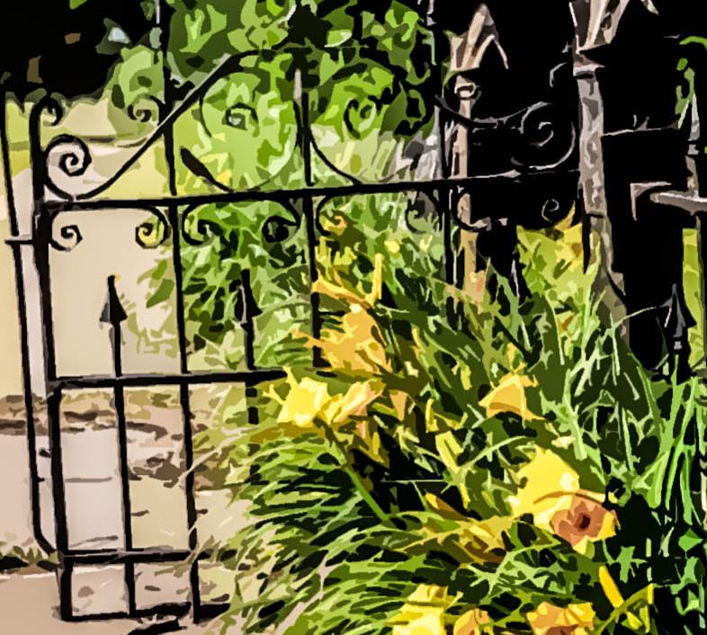 Stella D'Oro Daylillies-1.jpg
