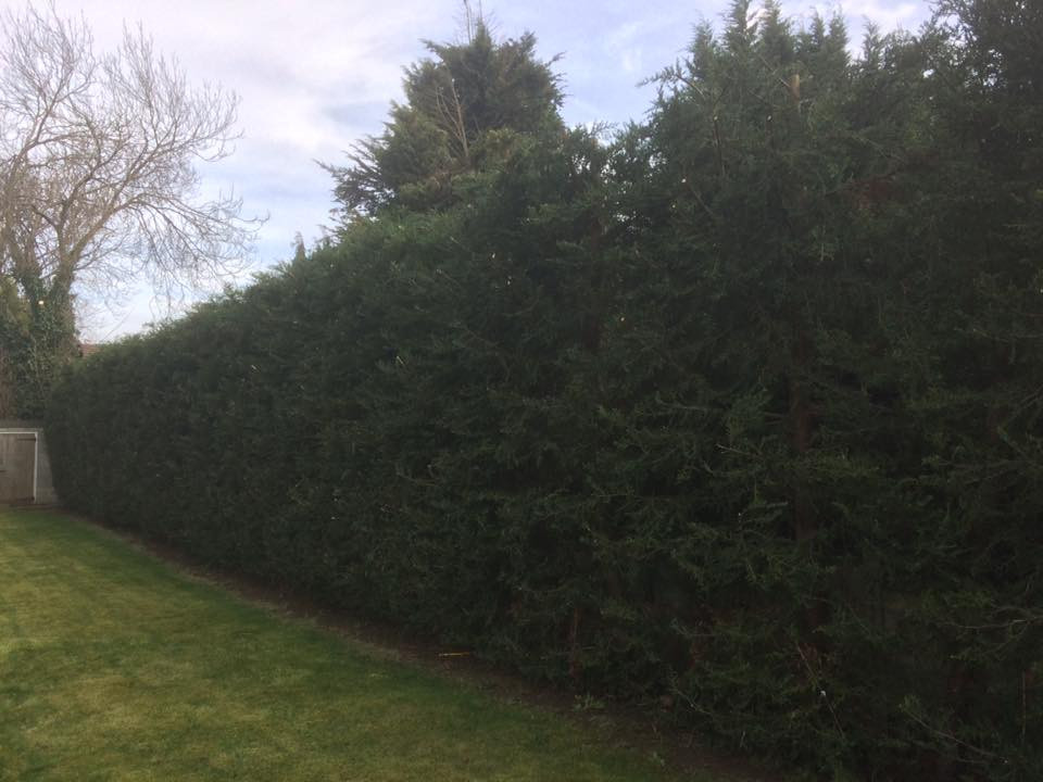Hedge Reduction West Kingsdown 2.jpg