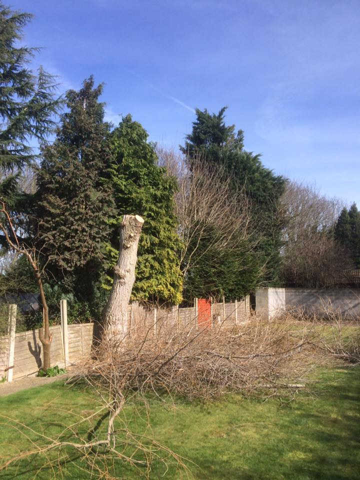 Tree Reduction Maidstone 1.jpg