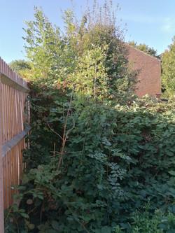 Garden Clearance Before