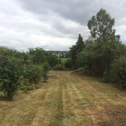 local garden clearance company