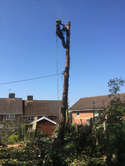 Tree surgeons in medway