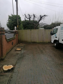 Completed Tree Removals