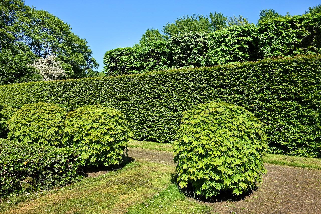 shorn-hedge-3392367_1280.jpg