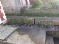 Garden Planting 4.jpg