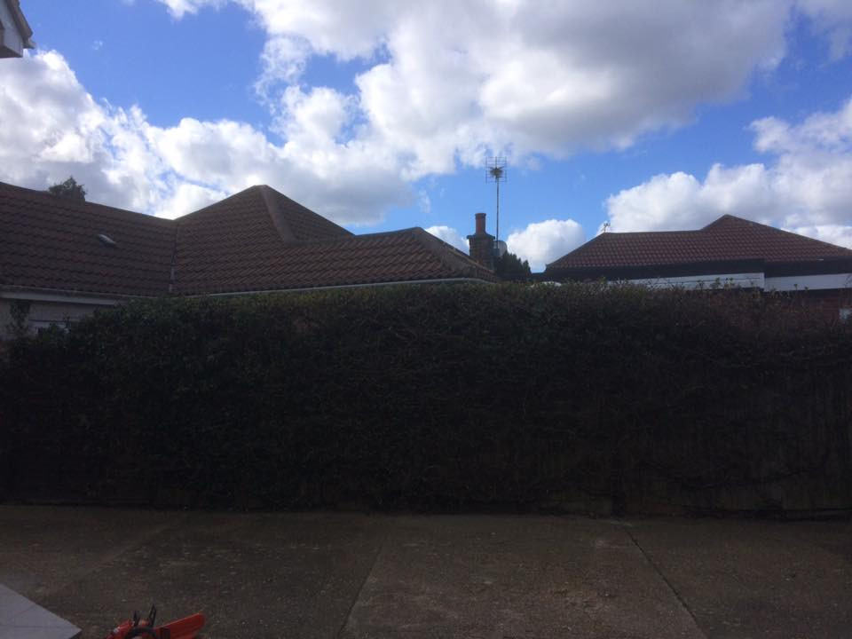 Hedge Reduction Maidstone 2.jpg