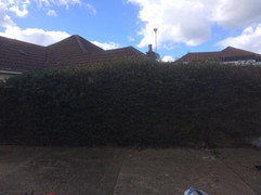 Hedge Reduction Maidstone 1.jpg