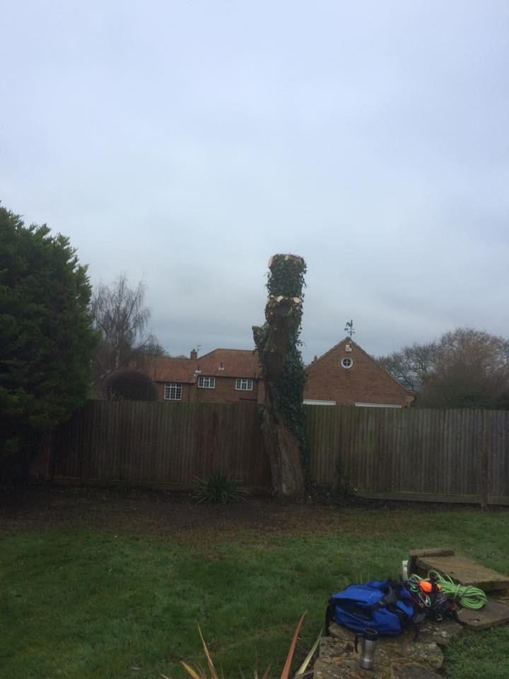 Willow Tree Pollarding.jpg