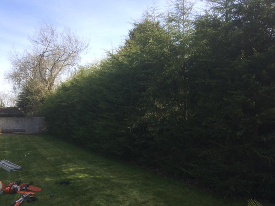 Hedge Reduction West Kingsdown.jpg