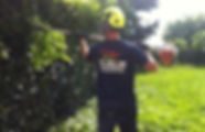 Tree Surgeon in Gillingham Kent